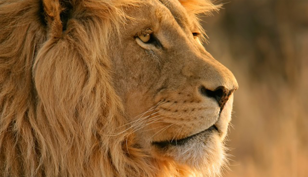 lion_on_wwdc_00